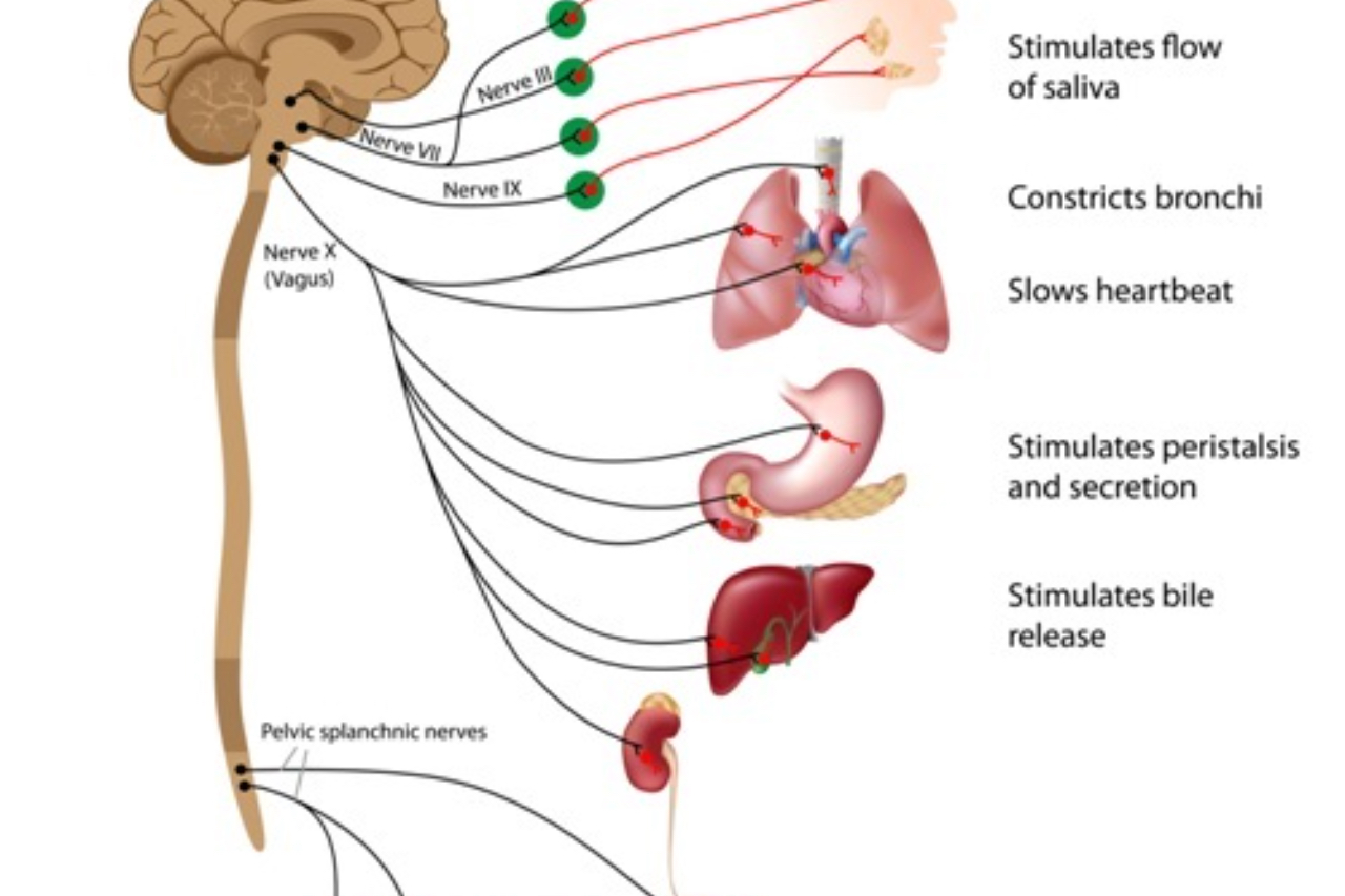 How to Stimulate the Vagus Nerve with Lifestyle – Luke Coutinho